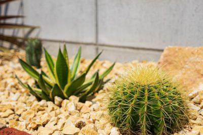 千葉県旭市【眺めて触って癒される、My Dry Garden。】